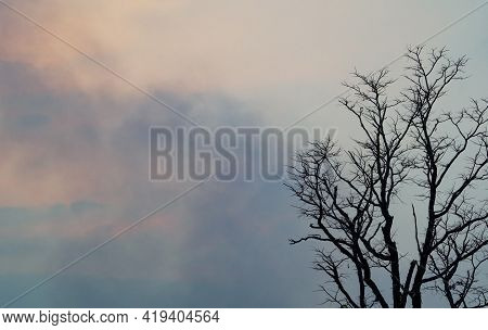 Dead Tree On Blue And White Clouds On Sunset Sky Background For A Peaceful Death. Despair And Hopele