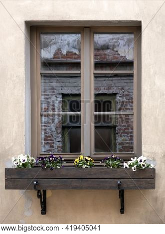 Window Of An Old House, Multi-colored Violets In A Box Under The Window, Reflection Of A Brick Wall