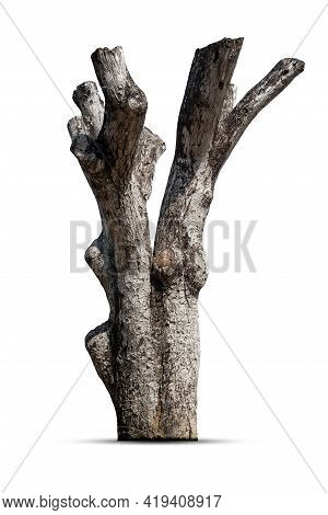 Dead Tree , Stump Tree ,old Timber , Piece Of Dry Tree Branch  Isolated On White Background.