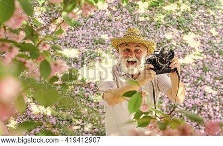 Man Tourist Use Camera Take Photo Of Cherry Blossom. Sakura In Full Bloom Photography. Senior Bearde