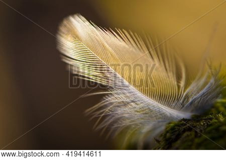 Feather Of A Bird Lies On Green Moss. A White Feather Lies In The Forest On The Ground, With Natural