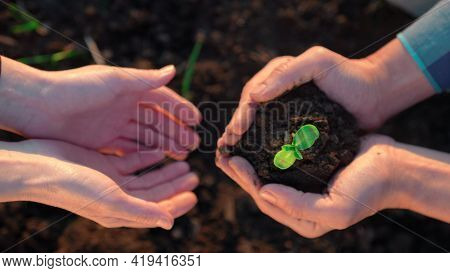 Agriculture Teamwork. Farmers Team Hands Plant A Small Plant In The Ground Soil. Business Teamwork A