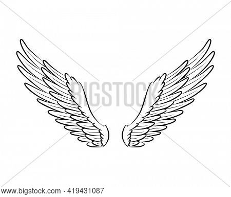 Vintage heraldic wings sketch. Monochrome stylized birds wings. Hand drawn contoured stiker wing in open position. Design elements in coloring style