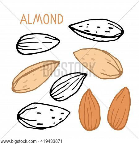 Almond Set. Hand Drawn Vector Nut And Almond Text. Doodle Sketch With Colored Flat. Organic, Fresh C
