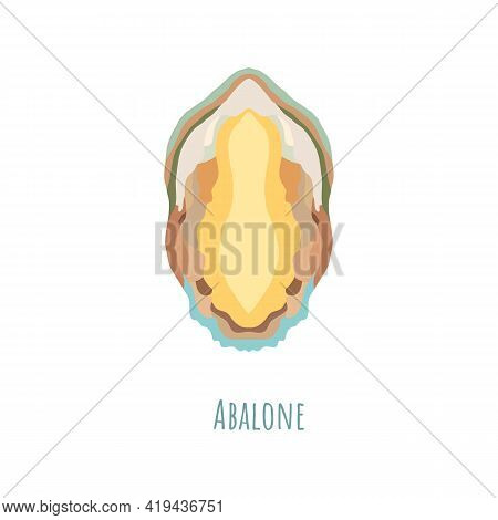Single And Symmetrical Abalone Seashell In Section