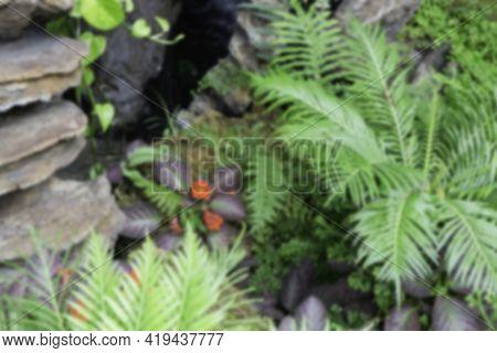 Tropical Green Surroundings In Outdoor Garden, Stock Photo