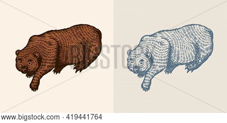 Grizzly Bear In Vintage Style. Brown Wild Animal. The Beast Is Playing. Hand Drawn Engraved Old Sket