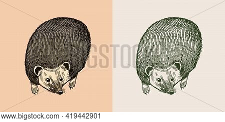 Hedgehog Or Spiny Forest Animal. Prickly Creature In A Flying Pose. Vector Engraved Hand Drawn Vinta