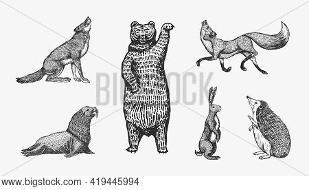 Forest Animals. Bear Grizzly, Wolf And Red Fox, Hare And Hedgehog And Seal. Beasts Stand On Two Paws
