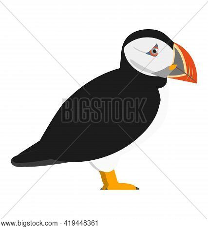 Fratercula Arctica - Atlantic Puffin - Side View - Flat Vector Isolated