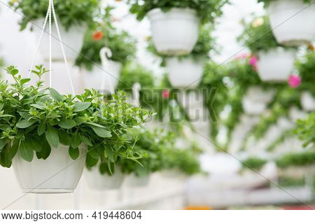 Botany And Plant Cultivation, Startup And Small Business