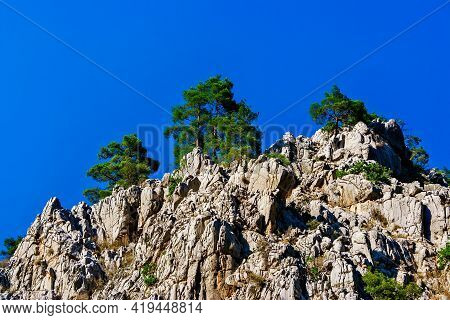 Pine Trees On The Rocky Cliffs On A Sunny Summer Day