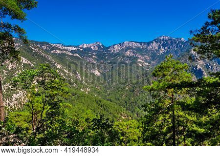 Mountains And Evergreen Forest On A Sunny Summer Day