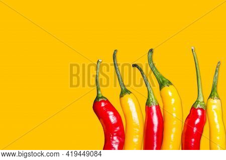 Red And Yellow Chili Peppers Isolated. Vibrant Color Chili Pepper. Hot Spicy Food Ingredient. Empty