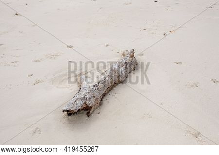 Driftwood On The Beach In Gulf Shores, Alabama, Usa