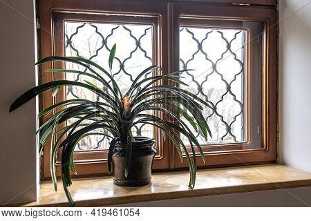 Home Plant On Windows For Decorative Design. Stylish Botany Interior. Gardening Home.