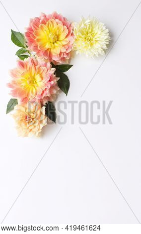 Flowers Composition. Dahlias Flowers On White Background. Valentine's Day, Mother Day, Women's Day,
