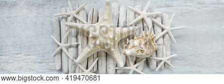 Driftwood And Starfishes Banner. Summer Banner In Marine Style .sea Driftwood And White Dry Starfish