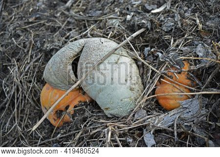 Garbage Rotting Pile With Vegetables And Pumpkin Cesspool