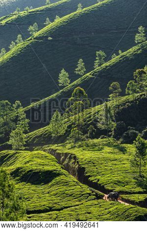 Beautiful tea plantations landscape with a car driving through in Munnar, India