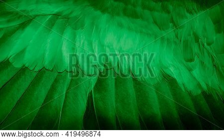 Green Feather Pigeon Macro Photo. Texture Or Background