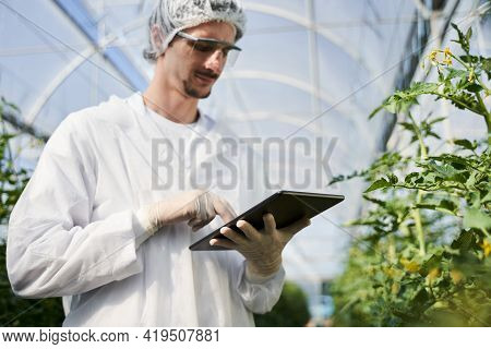 Young Male Agronomist Using Touchpad In Greenhouse
