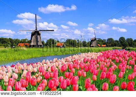 Traditional Dutch Windmills Along A Canal With Pink Tulip Flowers In The Foreground, Netherlands
