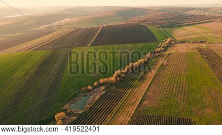 Aerial View Of Wheat Fields, Agricultural Land. The Drones Flight Over Agricultural Land In The Even