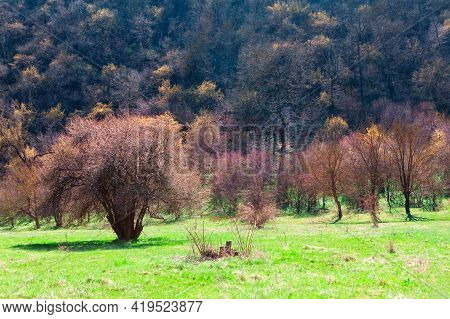 Nature Reserve In The Spring Season . Parkland With Trees And Green Meadow