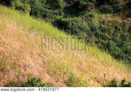 Lush Green Hillside Covered With A Rustic Fence And Grasslands And Mustard Plant Wildflowers During