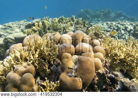 Colorful Coral Reef At The Bottom Of Tropical Sea, Hard And Fire Corals , Underwater Landscape