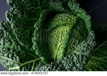 Savoy Cabbage Close Up Green, Dark And Moody