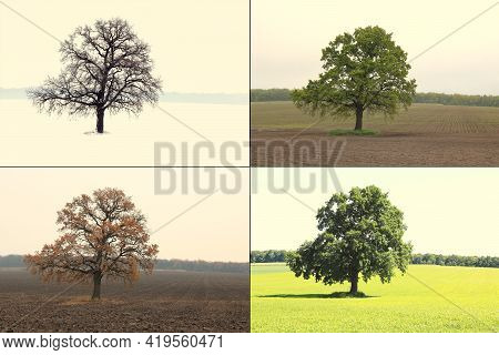 Abstract Image Of Lonely Tree In Winter Without Leaves On Snow, Tree In Spring On Grass, Tree In Sum