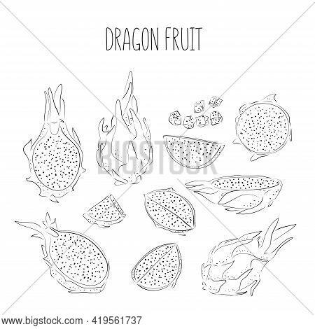 Dragon Fruit Line Vector Drawing Big Set. Hand Drawn Tropical Food Illustration. Pink Summer Dragonf