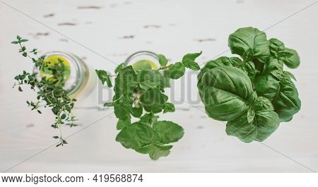 Fresh herbs at kitchen countertop top view of genovese basil, mint, thyme in hydroponic jars. DIY gardening at home banner.