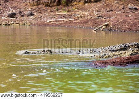 Nile Crocodile Hiding In Water. Crocodylus Niloticus, Largest Fresh Water Crocodile In Africa, Is Pa
