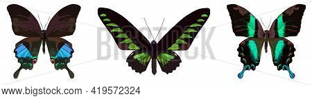 Colorful Butterflies With Iridescent Patterns Isolated On White Background. Illustration. Vector, Ep