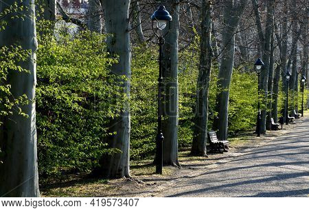 In The Park Or Garden There Are A Number Of Park Benches Among The Plane Trees In The Alley. The Wal