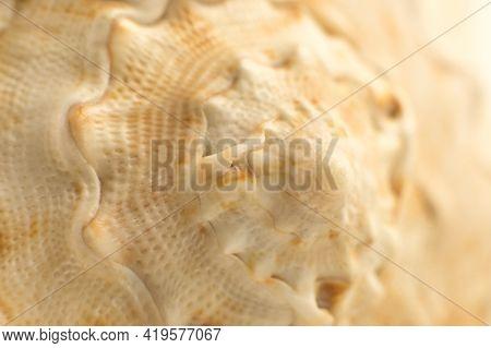 Beautiful Seashell Close-up. Spiral Seashells Macro Background.