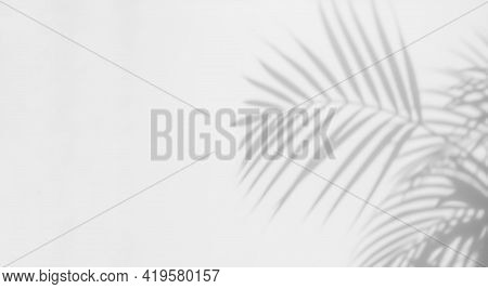 Abstract Background With Shadow Of Tropical Palm Leaves. Creative Minimal Summer Travel Concept With