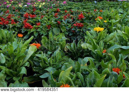 Picture Of Various Flowers In Flower Nursery