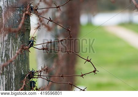 Close-up Of A Rusty Barbed Wire Fence Surrounding A Concentration And Extermination Camp, Focus In T
