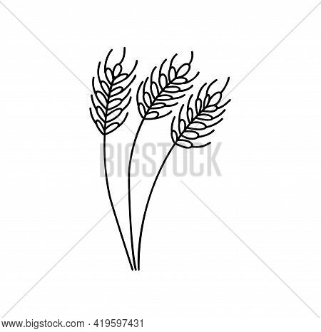 Wheat Spikelets Line Icon. Wheat Farm Symbol Autumn. Liner Style. Vector Illustration Monoline