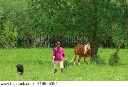 One Woman And Her Black Labrador Retriever Are Walking On The Grass At The Forest Edge, Back View. F