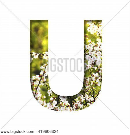 Spring Sunny Font. The Letter U Cut Out Of Paper On The Background Of Blooming Cherry On A Sunny Spr