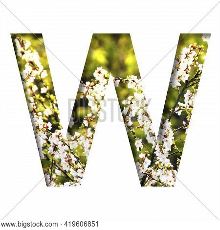 Spring Sunny Font. The Letter W Cut Out Of Paper On The Background Of Blooming Cherry On A Sunny Spr