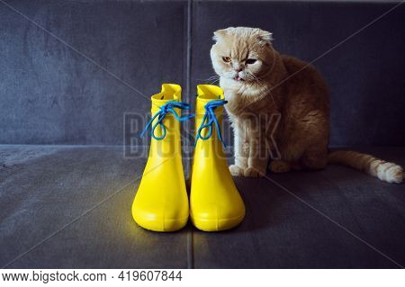 Rainy Mood, Outfit For Rainy Day. Yellow Rubber Boots And Scottish Fold Cat On Gray Sofa. Colors Of