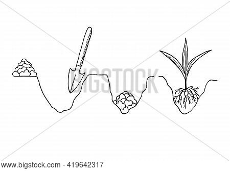 A Sequential Image Of The Stages Of Planting A Plant In The Soil. The Concept Of Preserving The Envi