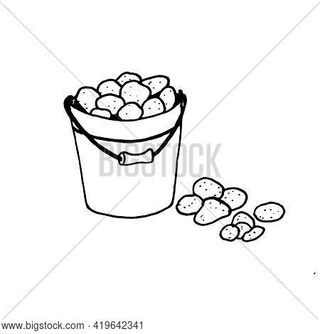 A Metal Bucket Filled With Potatoes. Storage Of Seasonal Vegetables. The Harvested Crop, A Bunch Of