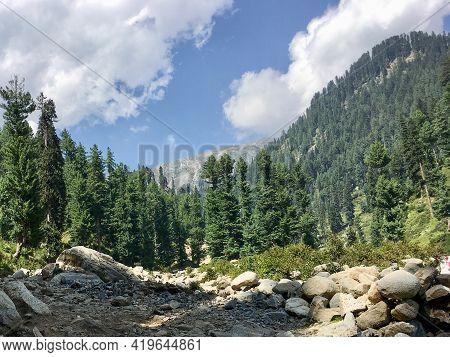 Forest And Mountain Scene In Gabbin Jabba Swat Pakistan